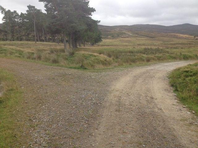 Track junction near Gledfield