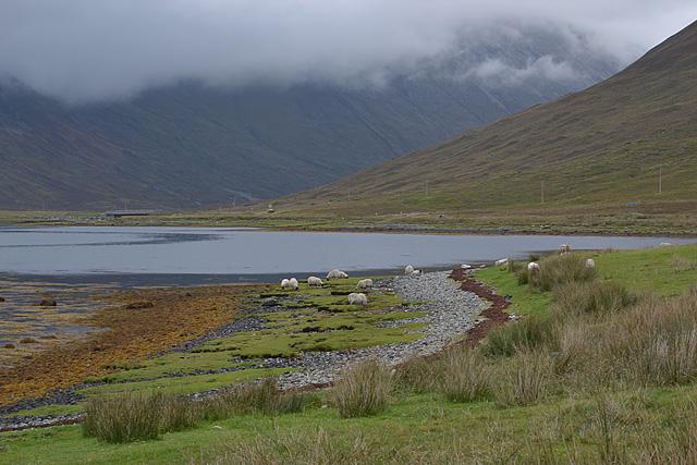 Sheep by Loch Slapin