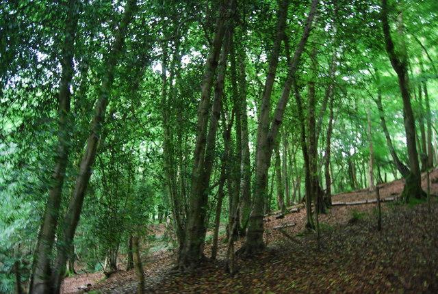Parkhill Wood