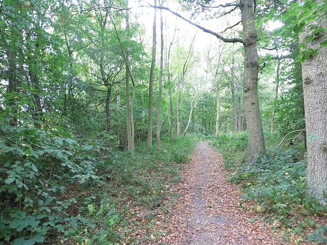 Woodland beside the Shiel Burn