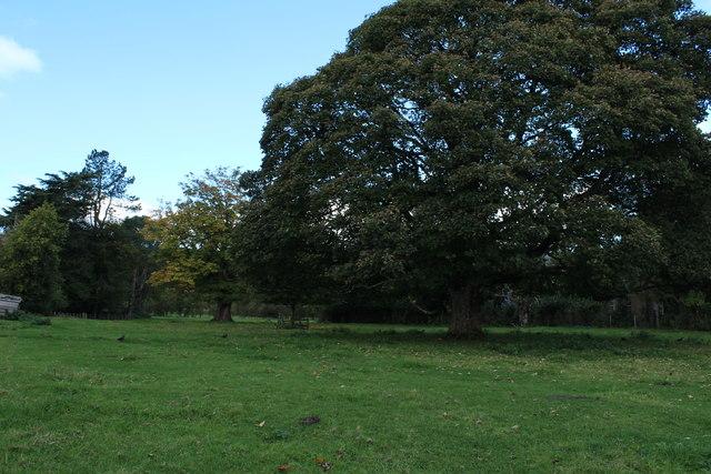Trees in Kirkmichael
