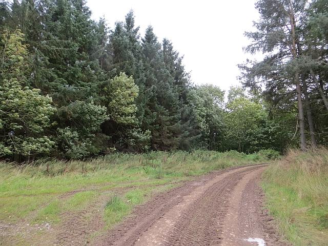 Track Junction, Old Plantation