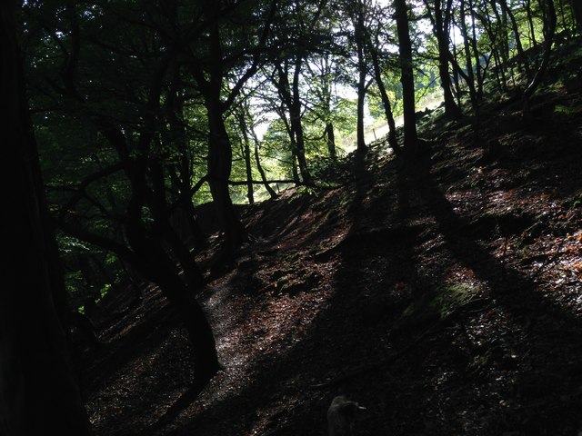 Sunlight in Cragg Vale woodland path