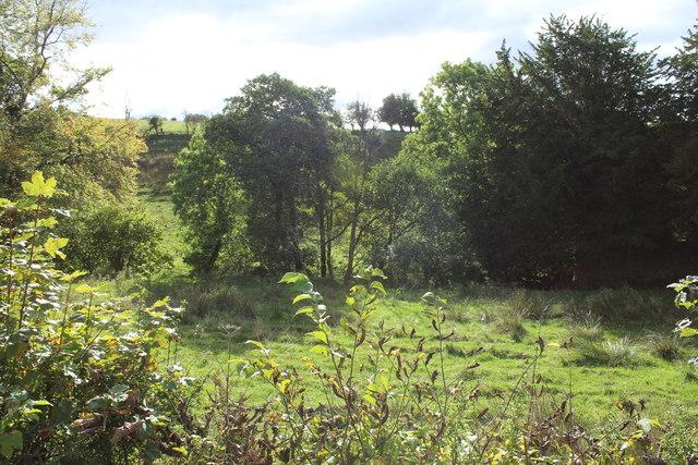 Woodland near Kirkmichael