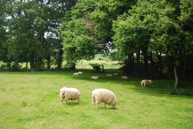 Quietly grazing