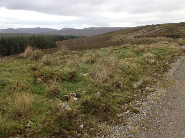 Moorland and forestry on Gledfield Estate