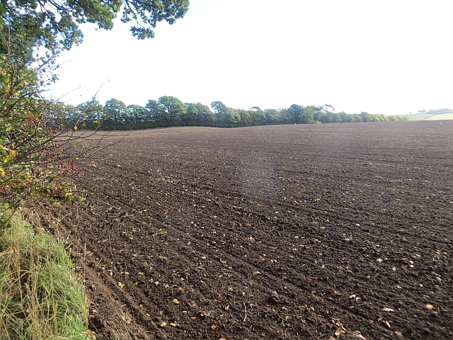 Newly cultivated field, Tarrylaw