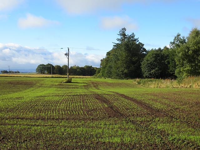 Emerging crop, Thorngreen