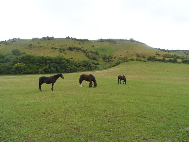Horses on the downs near Truleigh Manor Farm