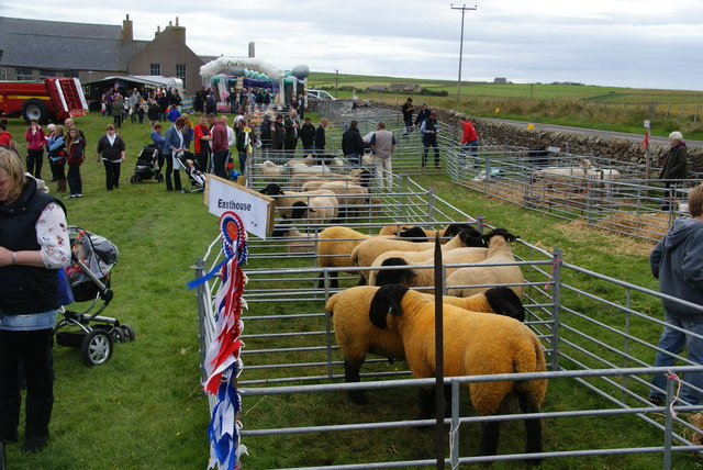Sheep at the East Mainland Show