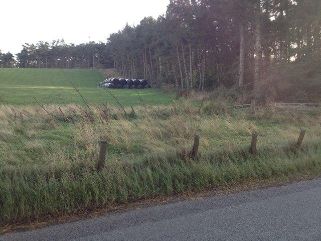 Fields and wood near Knocknahar Farm