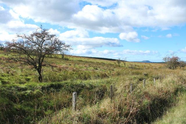 Moorland near White Hill