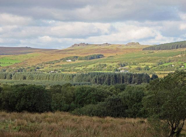 Forestry at Blaen-cleddau, Mynachlog-ddu