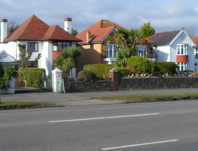 Houses and palm trees in Lower Sketty, Swansea