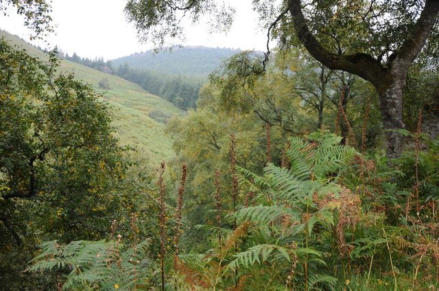 Forested valley above Lake Vyrnwy