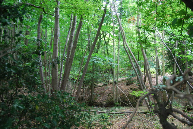Whorne Wood