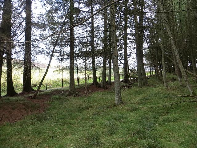 Woodland near Shire End