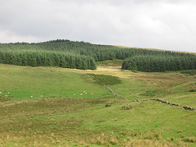 Woodland on Arlick Hill