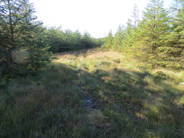Tracks of an all terrain vehicle in a firebreak in the forest