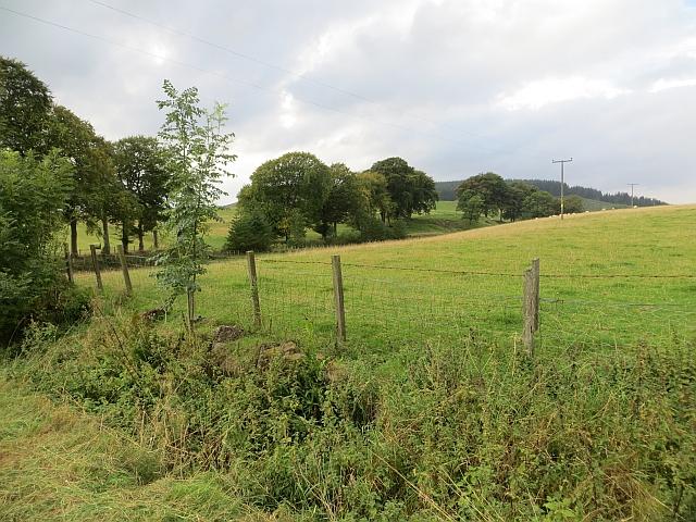 Grassland, Mains of Condie