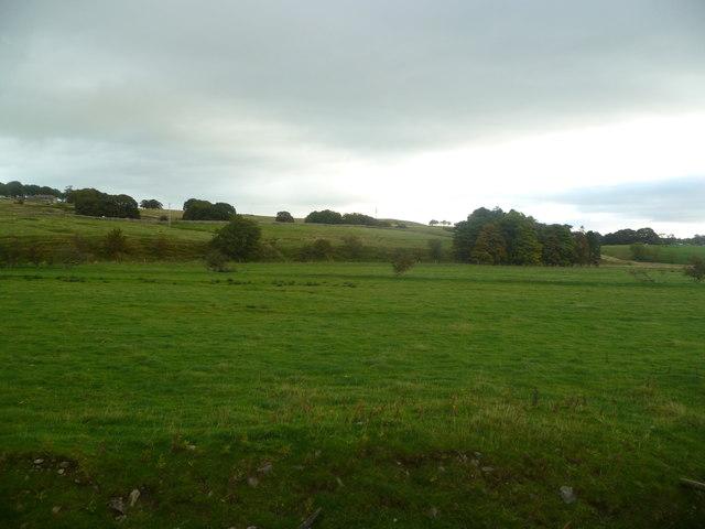 Pasture at Wath