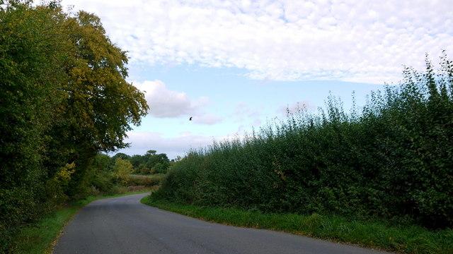 Grafton Road, with Kite