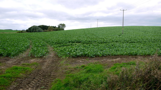 A good autumn sowing of rape