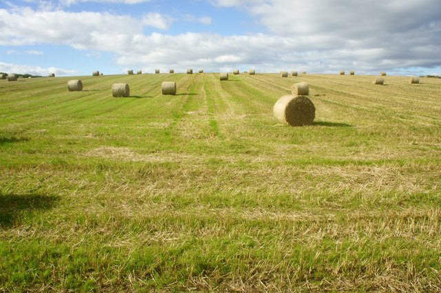Hay Bales in a field next to the A5087