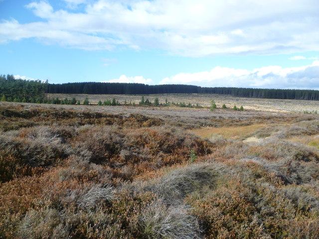 Sneaton High Moor