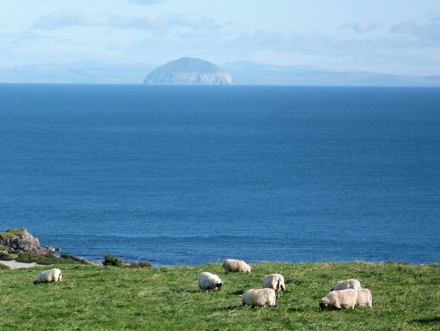 Sheep at Coledrain