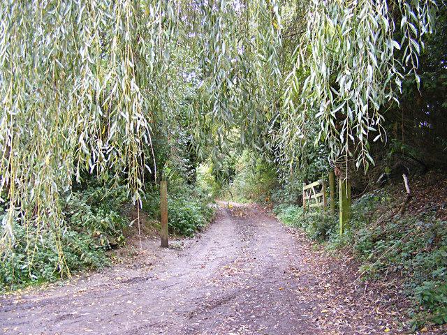 Footpath off Pigeon's Lane