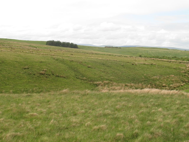 The cleugh of Loaning Burn and moorland east of Black Hill
