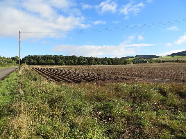 Potato field, South Gask
