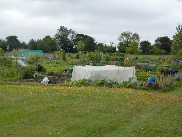 Allotments in Sawtry