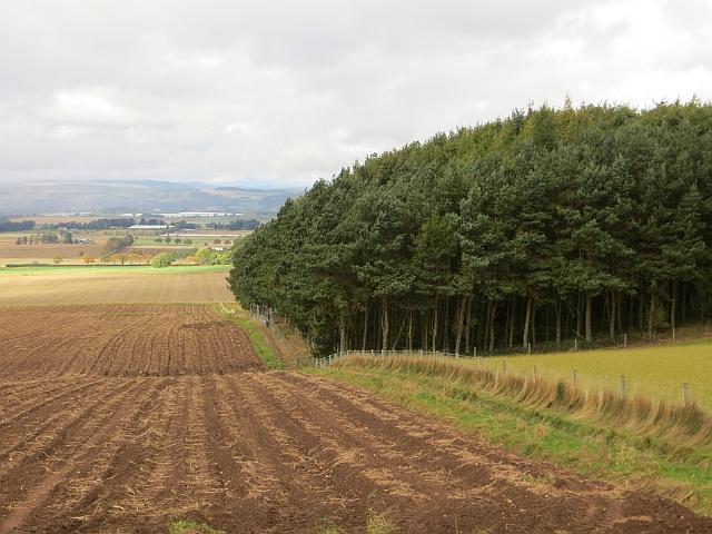 Potato field, Purlend
