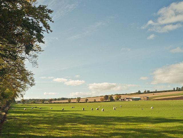 Farmland of Auchterflow