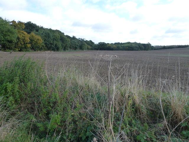 Farmland and Archer's Wood near Sawtry