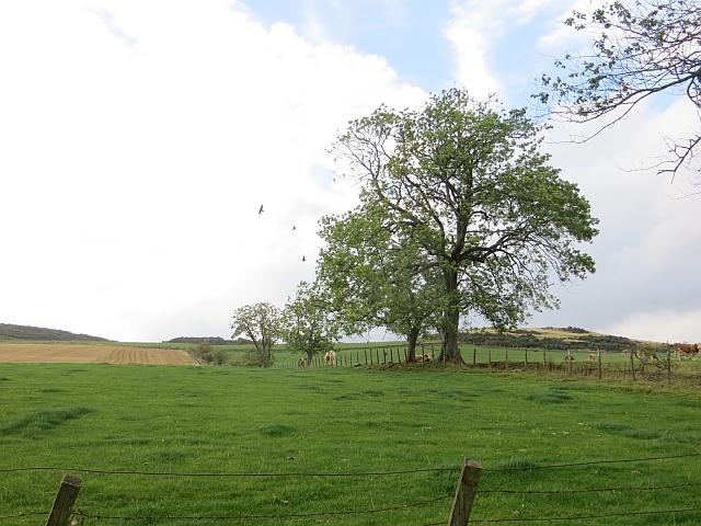 Grass fields, Binzean