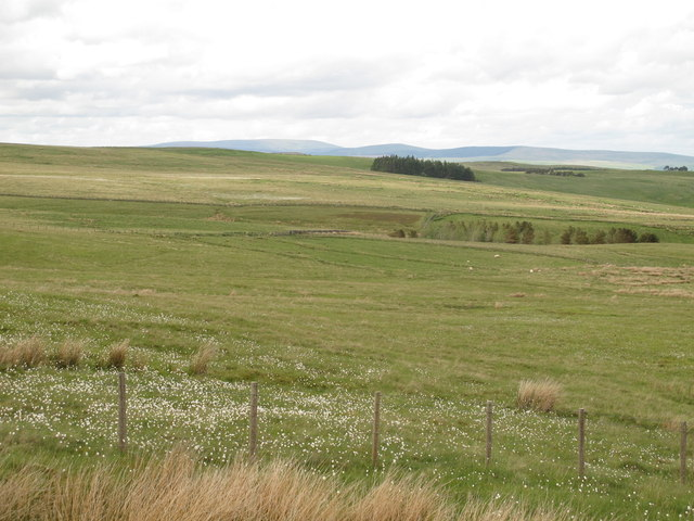 The headwaters of Elsdon Burn and Loaning Burn