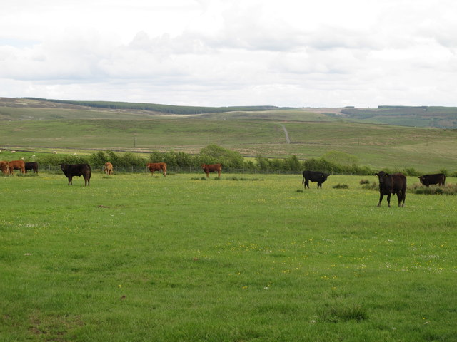 Farmland northeast of High Carrick