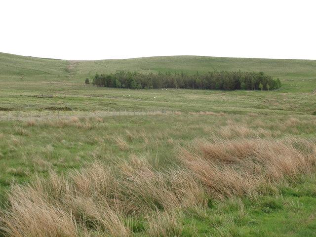 Moorland and plantation around Stitchel Sike