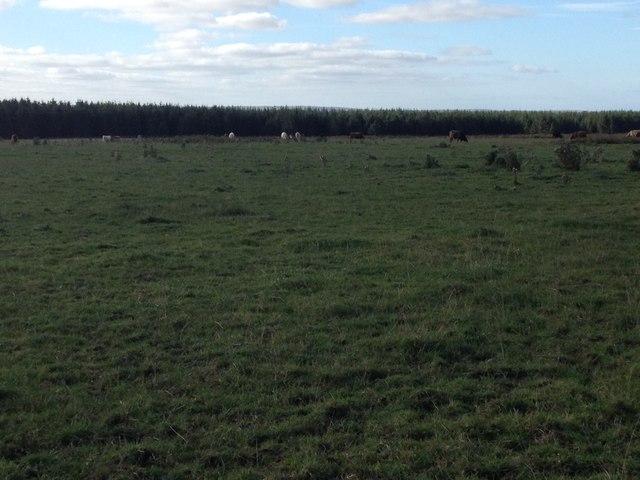 Farmland at Stroupster