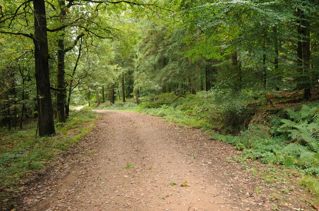 Track through forestry at Lodge Hill