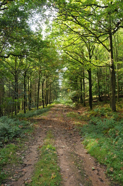 Track through forest at Lodge Hill