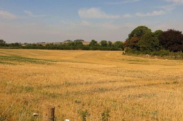 Arable field by Mackney Court