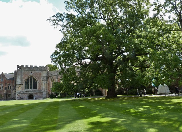 Majestic oak in the grounds of the Bishop's Palace, Wells