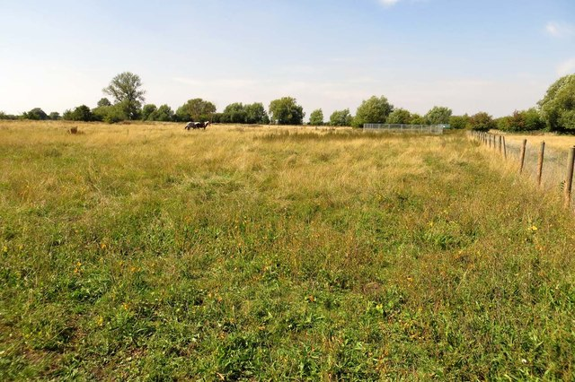 Field at Fraggle Farm