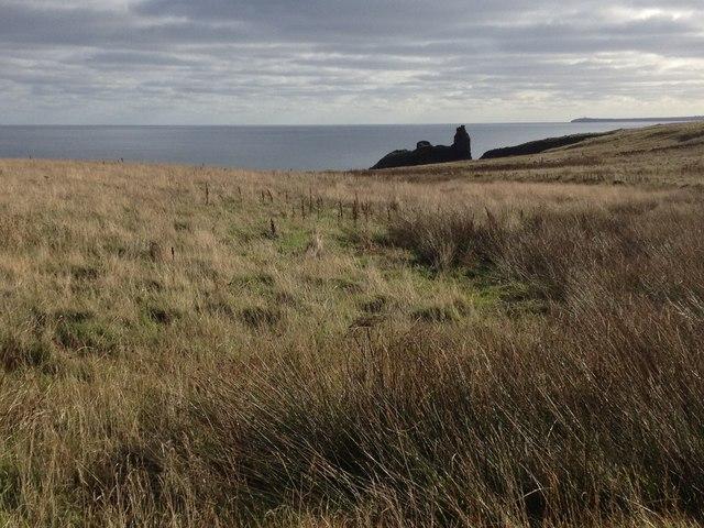 Grazing land near Bucholly Castle