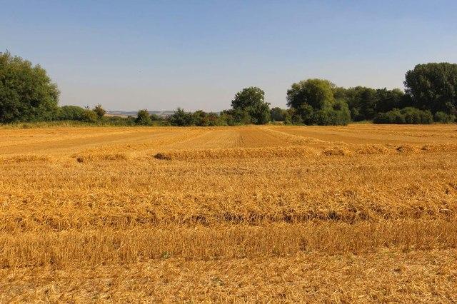 Arable field at South Moreton