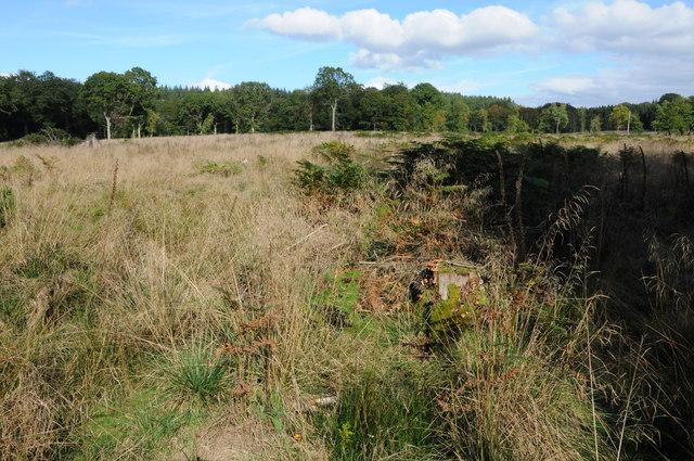 Upper Whitelea Green